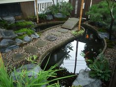 Koi pond in front yard of Sherman Street residence in North Cambridge