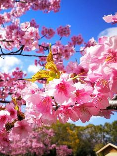 When's the best season to visit Japan? Answer: any one of them, but you have to know where to go. (and we know where to go) Tokyo Travel Guide, Japan Travel Tips, Ikebana, Japanese Plum, Visit Japan, Best Seasons, Solo Travel, Where To Go, Blossoms