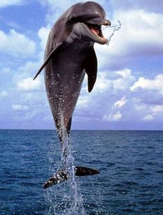 Funny Wildlife, Yippie, Dolphin Spectacle