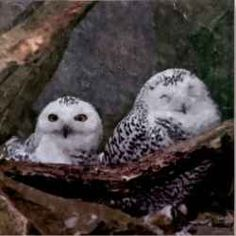 People love owls, they are really cute. And wise. And amazing! There are so many different species of owls but any of them have something magnificent.  Here you will find lots of them, take a look and enjoy!