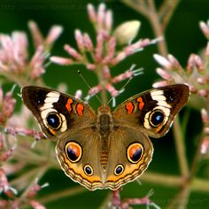 ~~Beautiful Eyes by *Sooper-Deviant~~