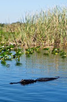 Making Friends in the Everglades