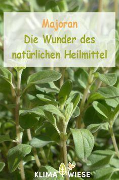 Parsley, Spinach, Herbs, Vegetables, Creme, Edible Plants, Marigold Flower, Herb