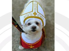 Pope Francis says all dogs do go to heaven - Pets - TODAY.com