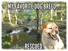My Rescued Dog
