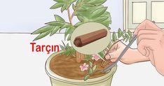 Çiçeklerinizin Dibine Tarçın Döktüğünüzde - New Sites Small Gardens, Outdoor Gardens, Sagittarius Love Horoscope, Perenial Garden, Sun Shade Tent, Diy Porch, Room Color Schemes, Planting Roses, Veg Garden