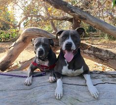 Angels Bark Dog Rescue Page Liked · August 8 · Edited ·     WOMAN WITH TERMINAL CANCER DESPERATELY LOOKING FOR A LOVING HOME FOR HER BABIES PLEASE HELP AND SHARE..   Located Orange County California .-www.angelsbarkrescue.org
