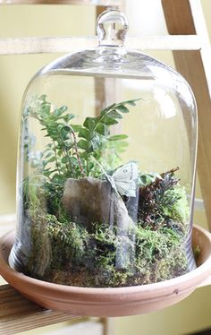 I was in point of fact enticed later than I proverb a succulent terrarium at one of my friends flourishing room, and soon realized that it is an awesome stuff for decorating home. Dish Garden, Bottle Garden, Glass Garden, Fairies Garden, Succulents Garden, Terrarium Plants, Glass Terrarium, Succulent Terrarium, Air Plants