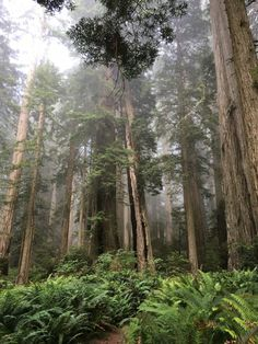 Redwoods National Park with kids, Hiking in the redwoods with kids, Star War locations in California, Sequoia National Park, Us National Parks, Best Places To Camp, Redwood Forest, Vacation Spots, Vacation Destinations, Vacation Ideas, Amazing Adventures, California Travel