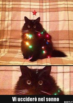 christmas memes 23 Holiday Animal Memes As A Forewarning Of Whats T… – Animals Cute Funny Animals, Funny Animal Pictures, Funny Cute, Top Funny, I Love Cats, Crazy Cats, Cute Cats And Dogs, Cat Memes, Funny Memes
