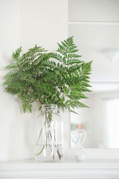 ferns- also very affordable! Will they be back by March?? Might like this better than baby's breath- less flowery and definitely Southern. Could also consider using metal/galvanized tins instead of glass vases or jars to add depth and a bit more masculinity.