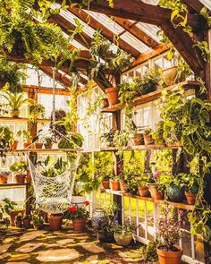 Greenhouse located in Virginia. Available for photographers to rent for sessions, elopements and vow renewals. Outdoor Plants, Outdoor Gardens, Dream Garden, Home And Garden, Greenhouse Interiors, Backyard Greenhouse, Room With Plants, Plant Decor, Indoor Garden