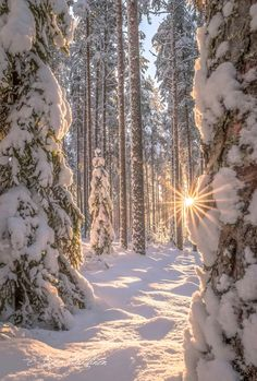 schnee bisuqr Schnee bisuqr You can find Paysage hiver and more on our website Winter Photography, Landscape Photography, Nature Photography, Photography Backgrounds, Photography Props, Newborn Photography, Wedding Photography, Beautiful Places, Beautiful Pictures