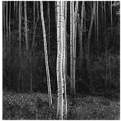 ⛰Ansel Adams Photography : More At FOSTERGINGER @ Pinterest   ⛰