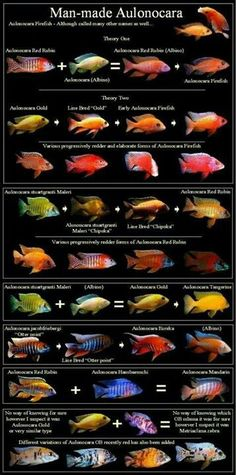 African Cichlid Compatibility Chart |African Cichlid Chart