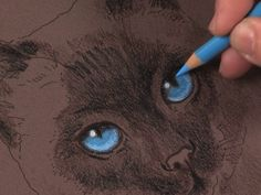Colored Pencil Animals: How to Draw a Cat