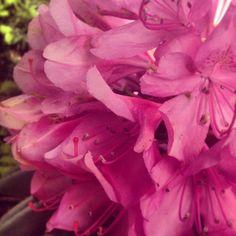 Pink Flowers #brighten a room