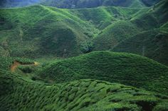 Cameron Highlands, Malasia