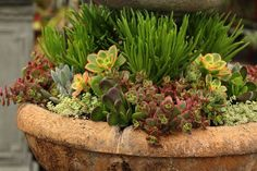 How to create a drop-dead-gorgeous succulent garden in 5 easy steps: with detailed succulent care tips and succulent container garden design secrets.