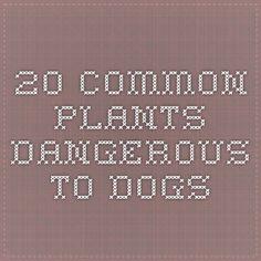 20 Common Plants Dangerous to Dogs