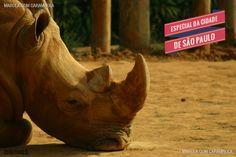 Hoje em nosso Especial de São Paulo vamos levar vocês para uma experiência diferente no Zoológico. Confira lá.  www.marolacomcarambola.com.br/zoologico-de-sao-paulo