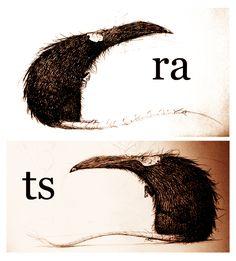 rats doodles by thedoberman on deviantART