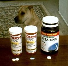 Chill Pills: Behavior-altering drugs can help dogs with phobias or anxiety disorders – but you have to learn which ones work best in each case.