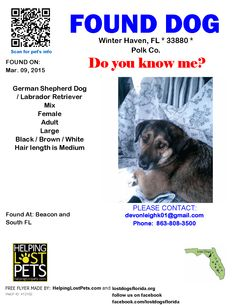 Found Dog - German Shepherd Dog - Winter Haven, FL, United States