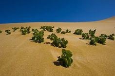 Namibia - vegetazione nel deserto