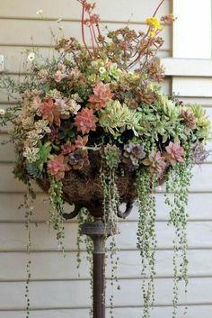 Old floor lamp repurposed as succulent planter
