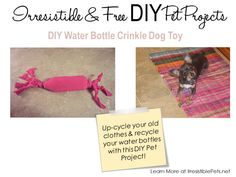 """DIY Water Bottle Crinkle Dog Toy- for my """"niece"""" (brothers) dog Rose who is super naughty! She will love to destroy this! Animal Projects, Animal Crafts, Diy Projects, Diy Dog Toys, Pet Toys, Dog Day Afternoon, Toy Puppies, Diy Stuffed Animals, Dog Treats"""