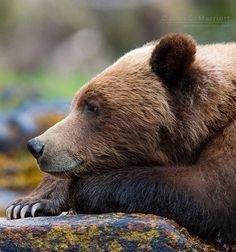beautiful-wildlife:  The Thinkerbyjohnemarriott British Columbia, Canada