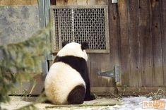 """""""Forgive me Father, for I have sinned... I didn't listen to momma Panda today..."""""""