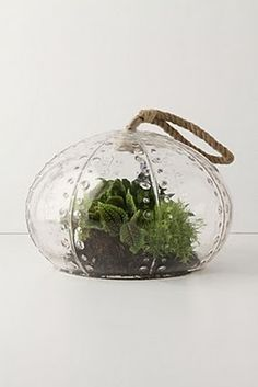 Urchin Terrarium