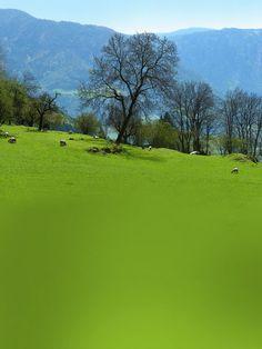 'Frühling auf der Alm' von Dirk h. Wendt bei artflakes.com als Poster oder Kunstdruck $6.75