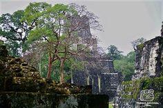 Tikal Tikal, Maya, Architecture, Art, Maya Civilization