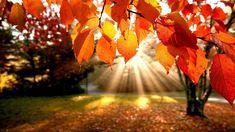 Fall Nature HD Wallpaper