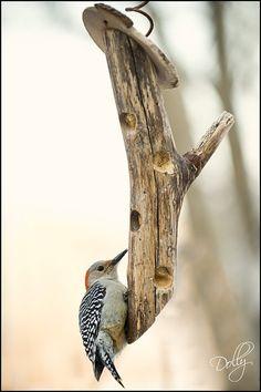 Bird Houses Diy Peanut Butter 69 Ideas For 2019 Woodpecker Feeder, Bird Suet, Bird House Feeder, Homemade Bird Feeders, Bird Bath Garden, Bird Houses Diy, Christmas Bird, Bird Boxes, Wild Birds