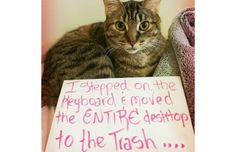 21 Hilarious Photos Of Cats Being Shamed For Their Crimes (Slide #88) - Pawsome
