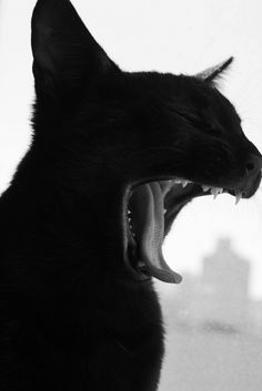 Probably a yawn, indolent so-and-so, but I like to think it's a fierce roar.