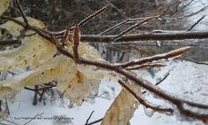 4 avril ´18_ Mon pays c'est l'hiver