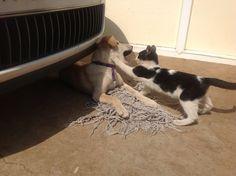 Kubara (Dog) and Roody (Cat)