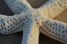 Starfish by Dony.