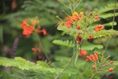 red-orange flowers