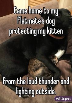 """Came home to my flatmate's dog protecting my kitten from the loud thunder and lighting outside."""