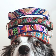 Colorful dog collars from Tail Wag http://tail-wag.com/ - the best products on the web, curated by Shopify