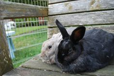 1st day rescue bunnies - shy - Oct 2013
