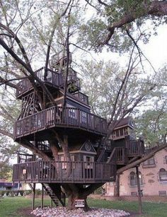Ultimate Tree House
