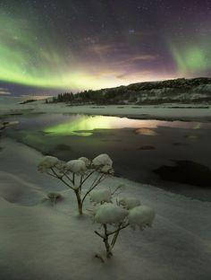 Northern lights over the Þingvellir National Park in Iceland