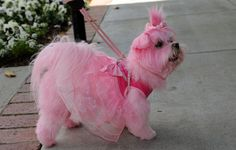 Miley in her new Party Dress-pink_maltese ❤ Pinned by Cindy Vermeulen. Please check out my other 'sexy' boards. X.